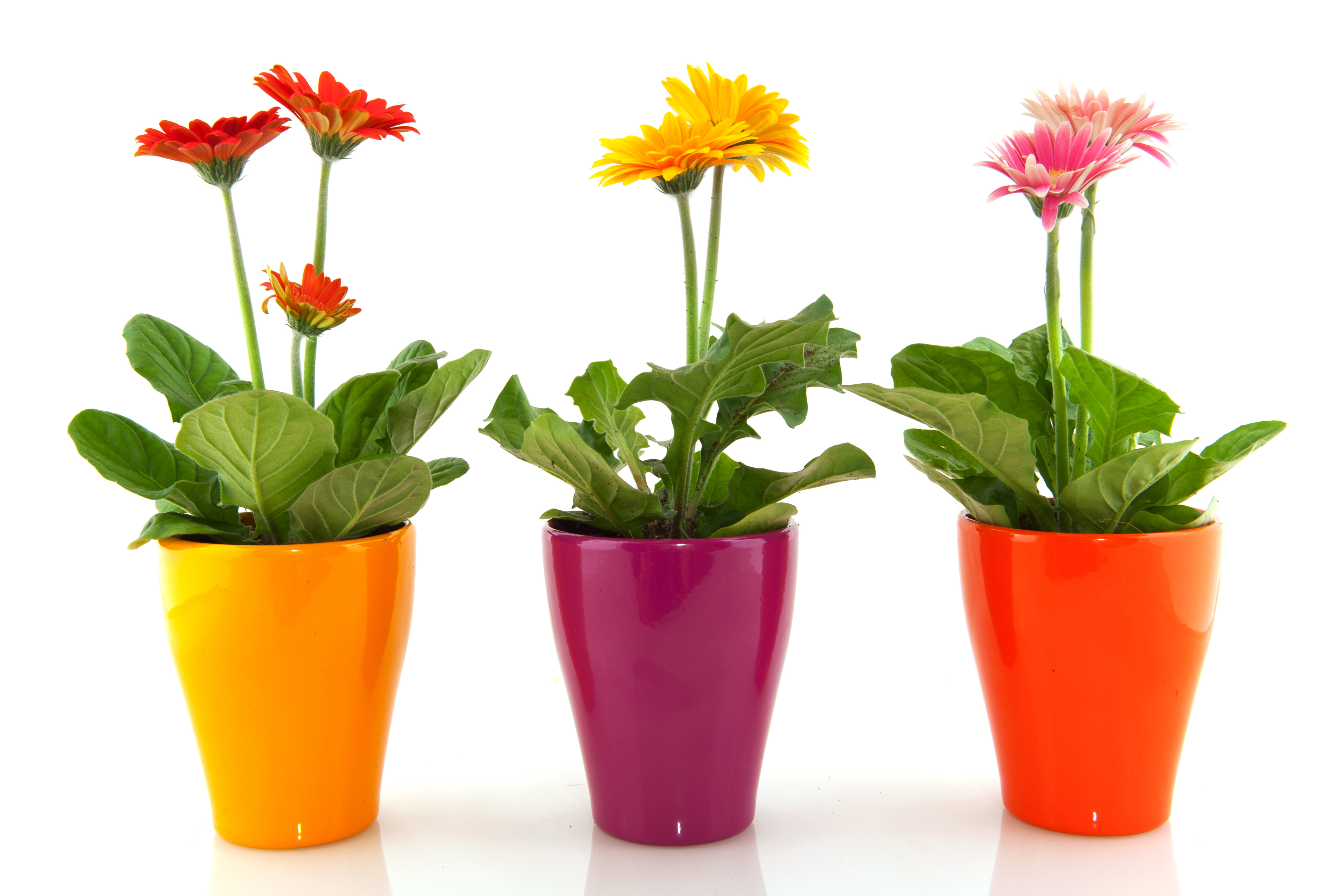 Starting a garden the bh blog for Flower pots with plants
