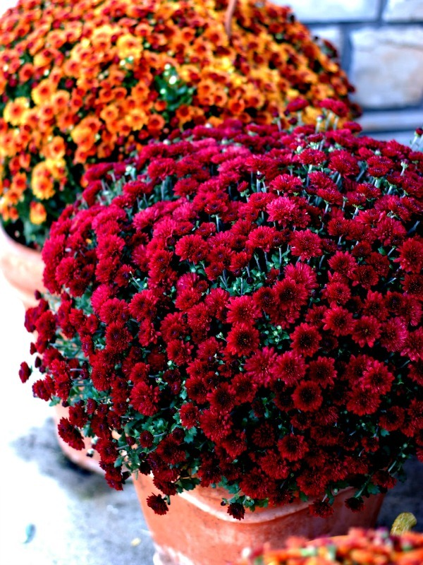 Decorating your apartment for fall the bh blog for Popular fall flowers