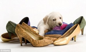 puppy-chewing-shoes