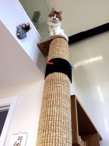 Houdini_Floor-to-Ceiling_Cat_Climbing_Tower_Post_Tree