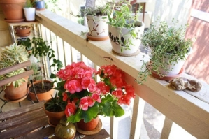 Flowers-on-a-small-balcony