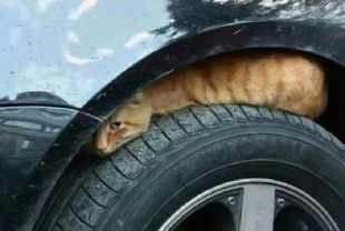 cat-under-wheel-warning