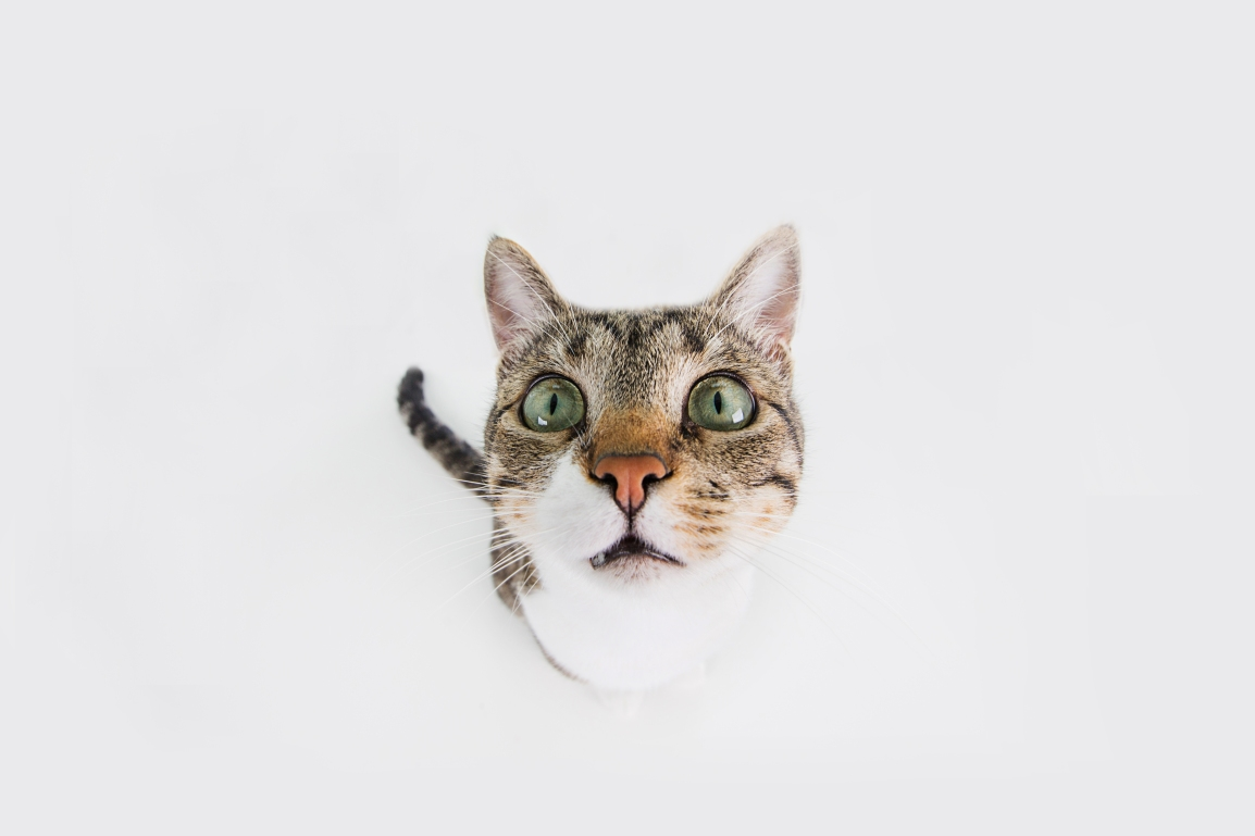 Cat - Surprised