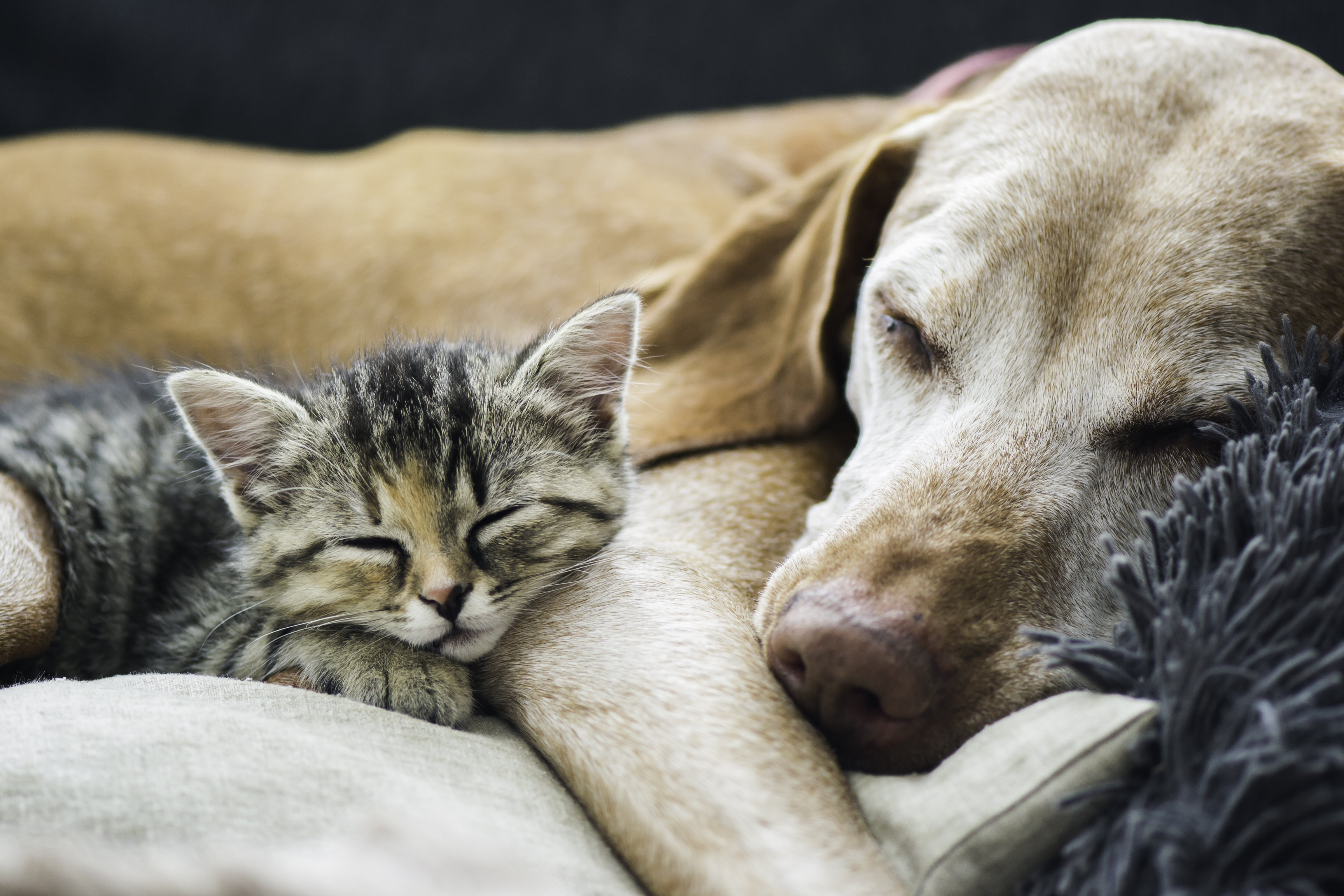 Tips for Apartment Living withPets